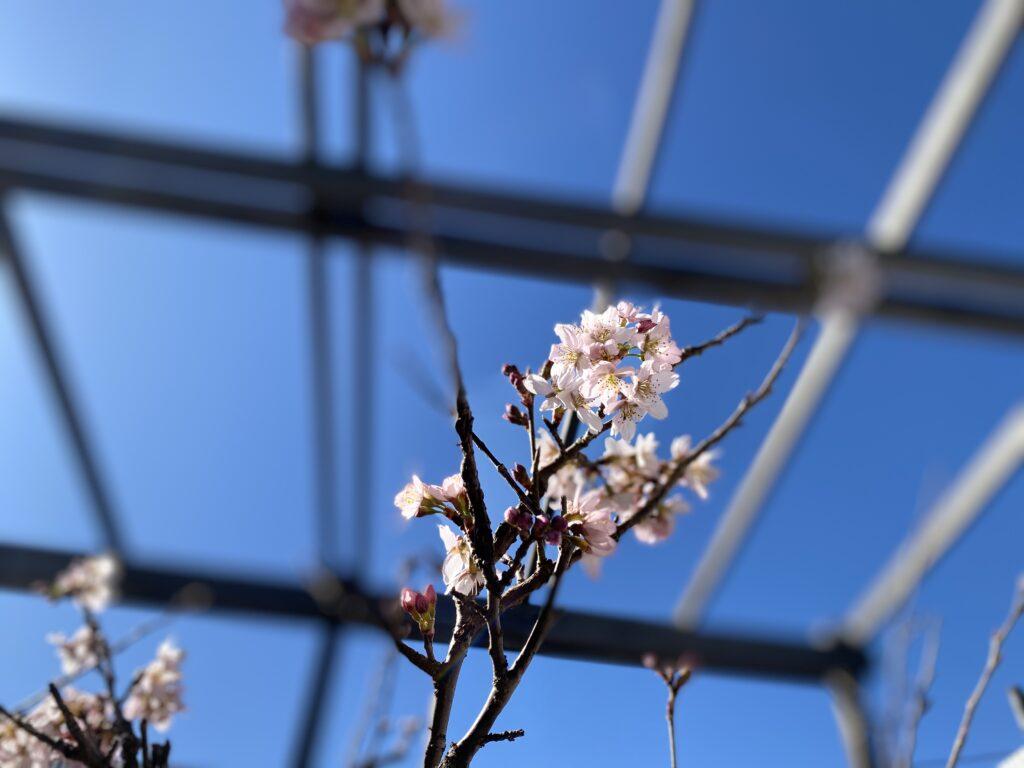 咲きました 写真